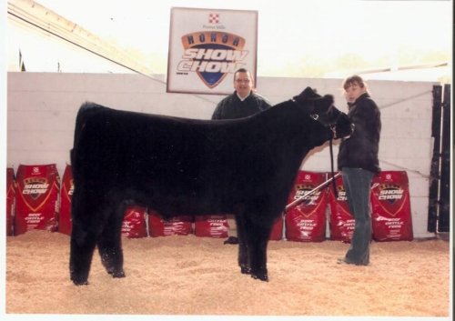 Allison had a great time showing Alfalfa that year and with him being a steer from our own herd made it special.